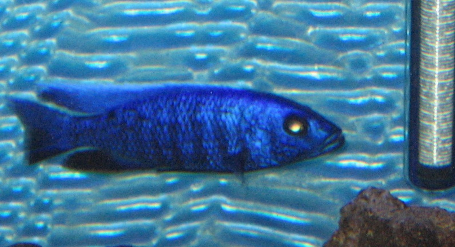 fish tank picture - big blue