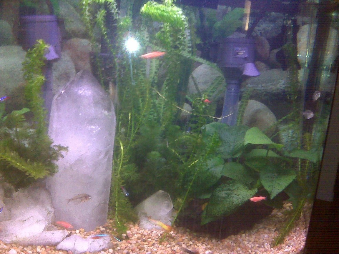 fish tank picture -