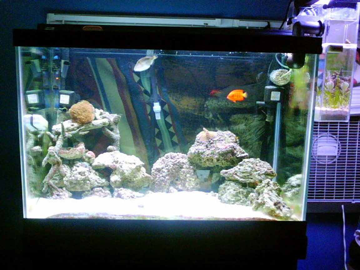 fish tank picture - 65g and refugium nothing FAKE in here srry bout the background my tanx in front of a window