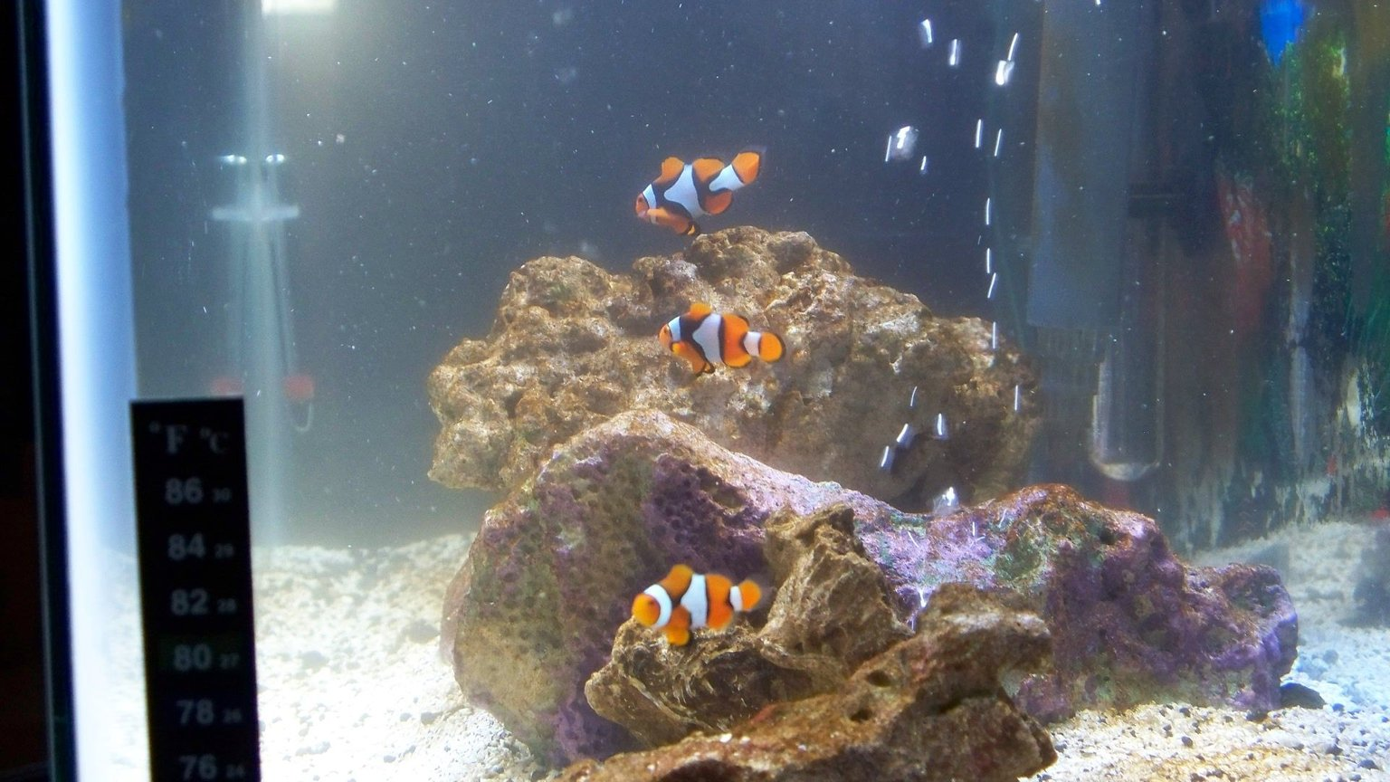 "fish tank picture - The ""Percs"" of saltwater tanks"