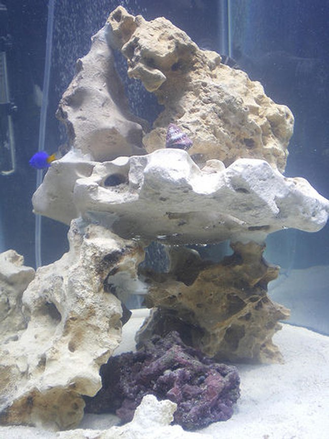 fish tank picture - Rockwork and Aquascape