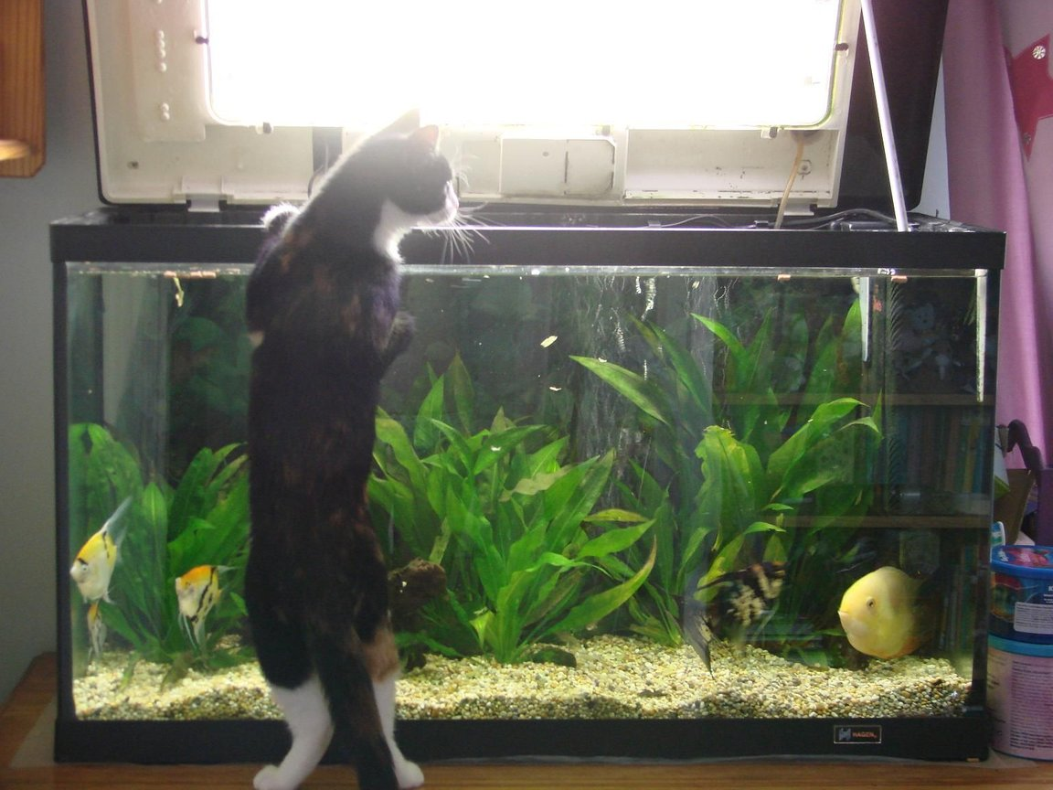 fish tank picture - Dinner time