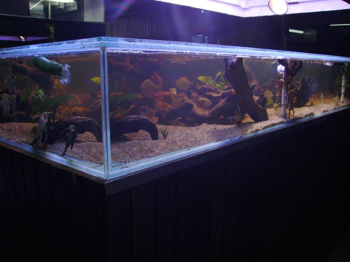 fish tank picture - Wild Amazon