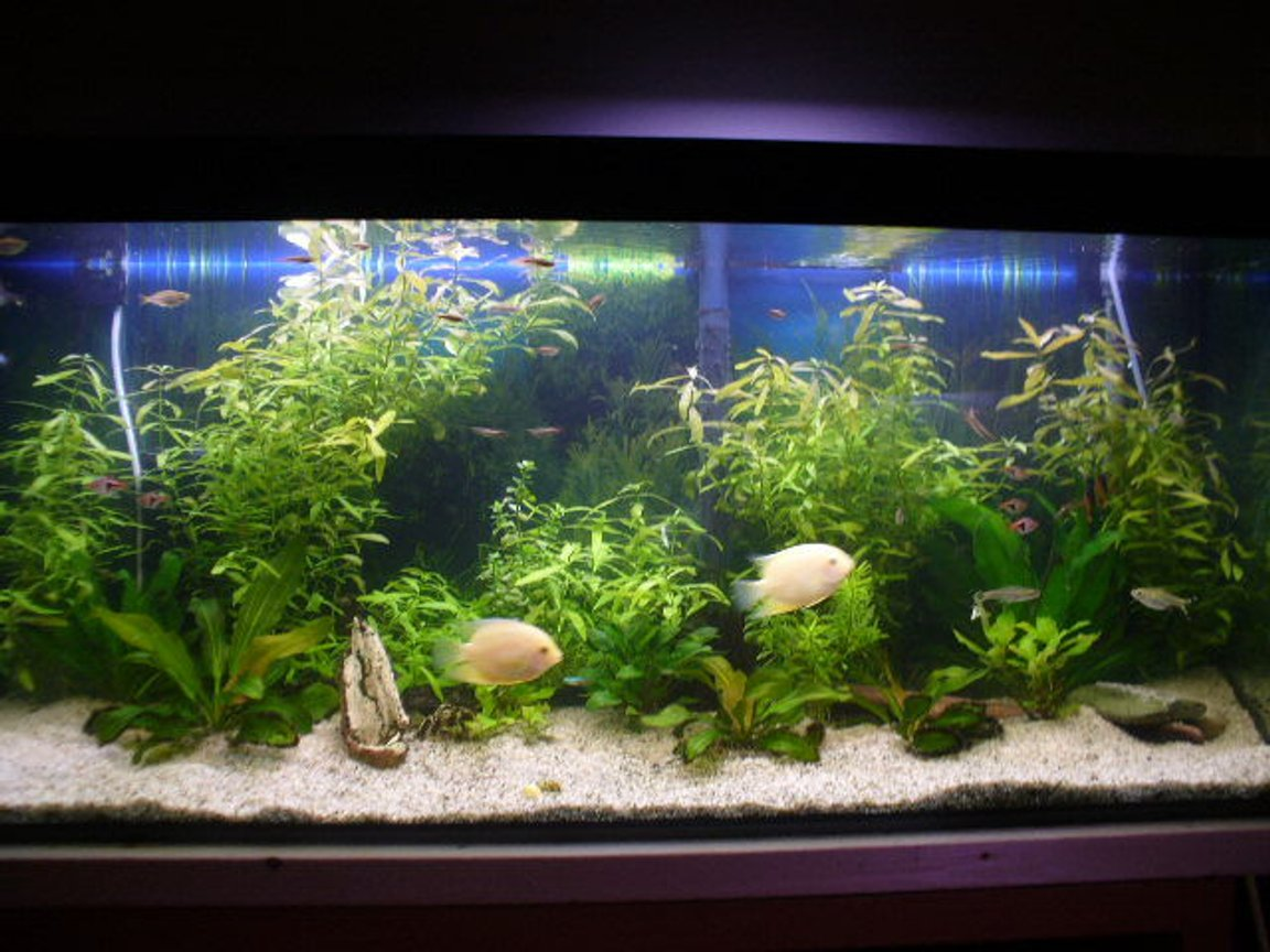 fish tank picture - new pics of the 66