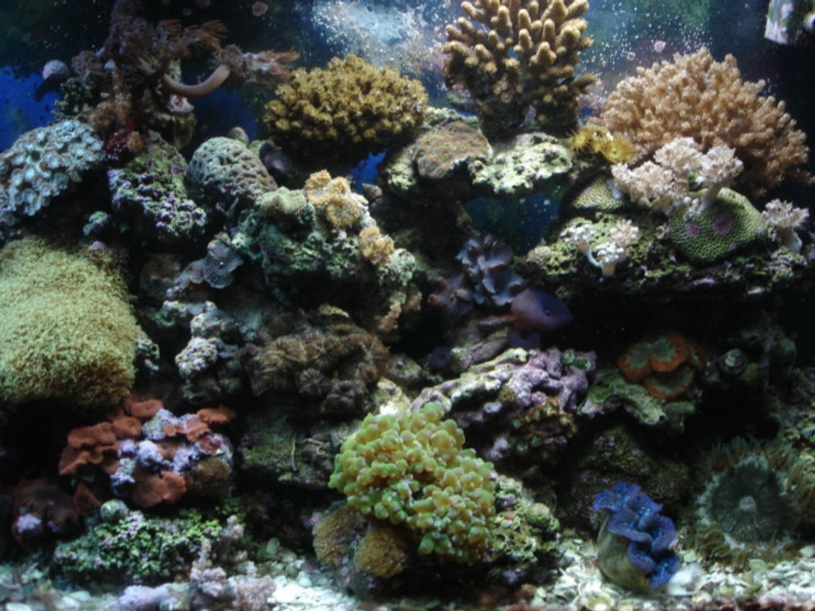 fish tank picture - reef
