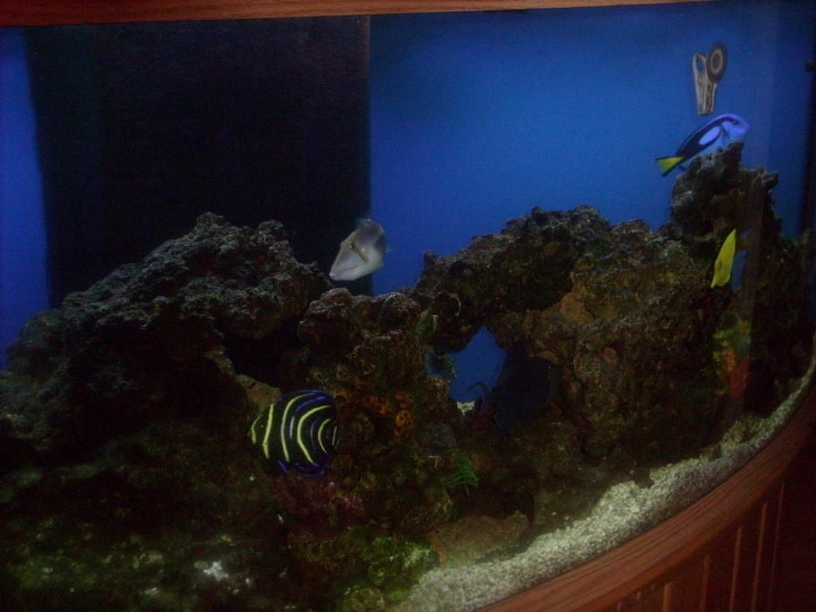 fish tank picture - Tank 2