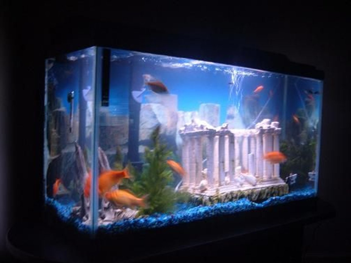 fish tank picture - This is my tank