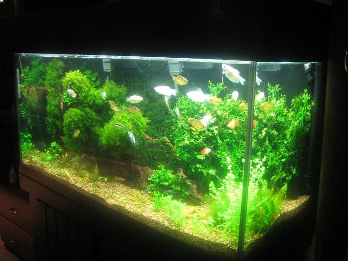 fish tank picture - Please rate my tank.