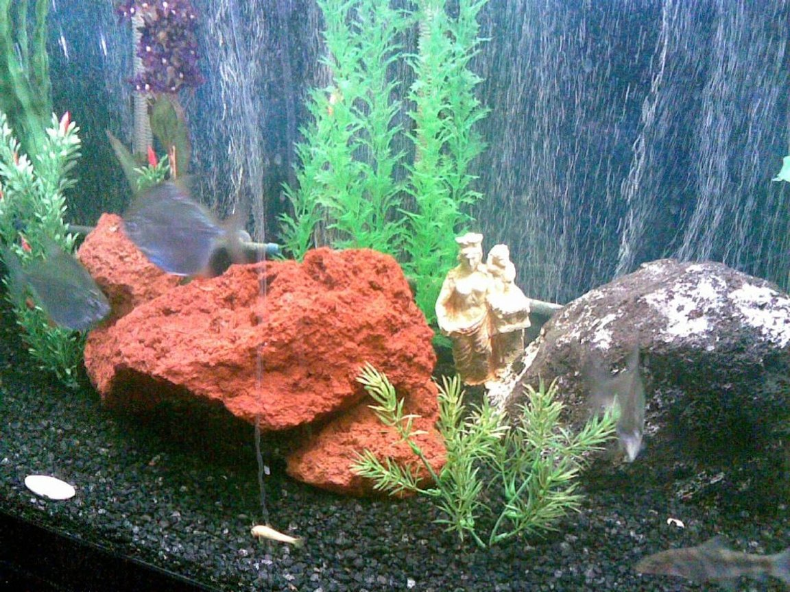 fish tank picture - Aphrodite