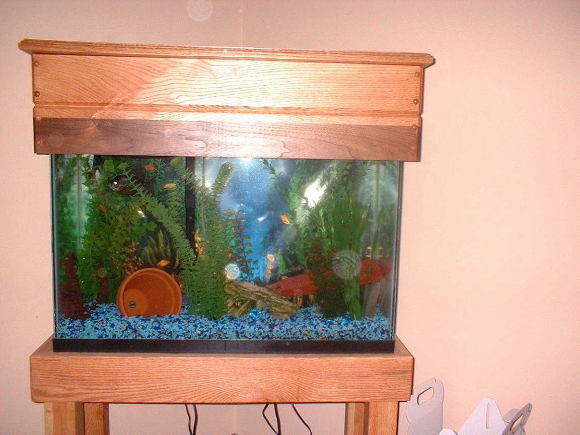 fish tank picture - Custom Stand / Aquarium Cover BLack walnut, oak,and red oak