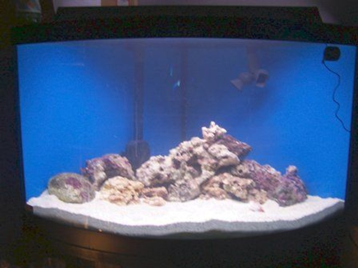 fish tank picture - updated pic, no protein skimmer or salt light, using freshwater fixture