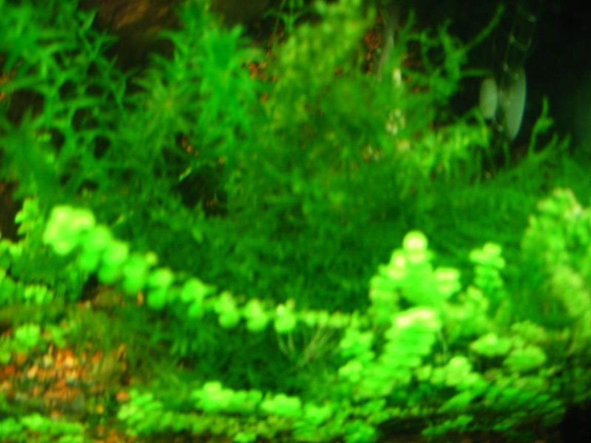 fish tank picture - Latest Picture of my fishtank as of Nov. 2, 2008