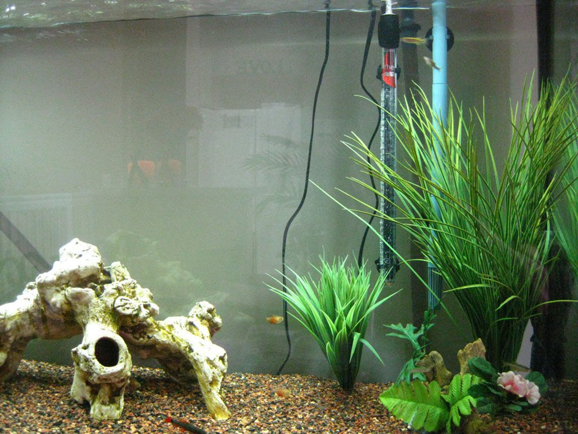 fish tank picture - Right Side Zoom