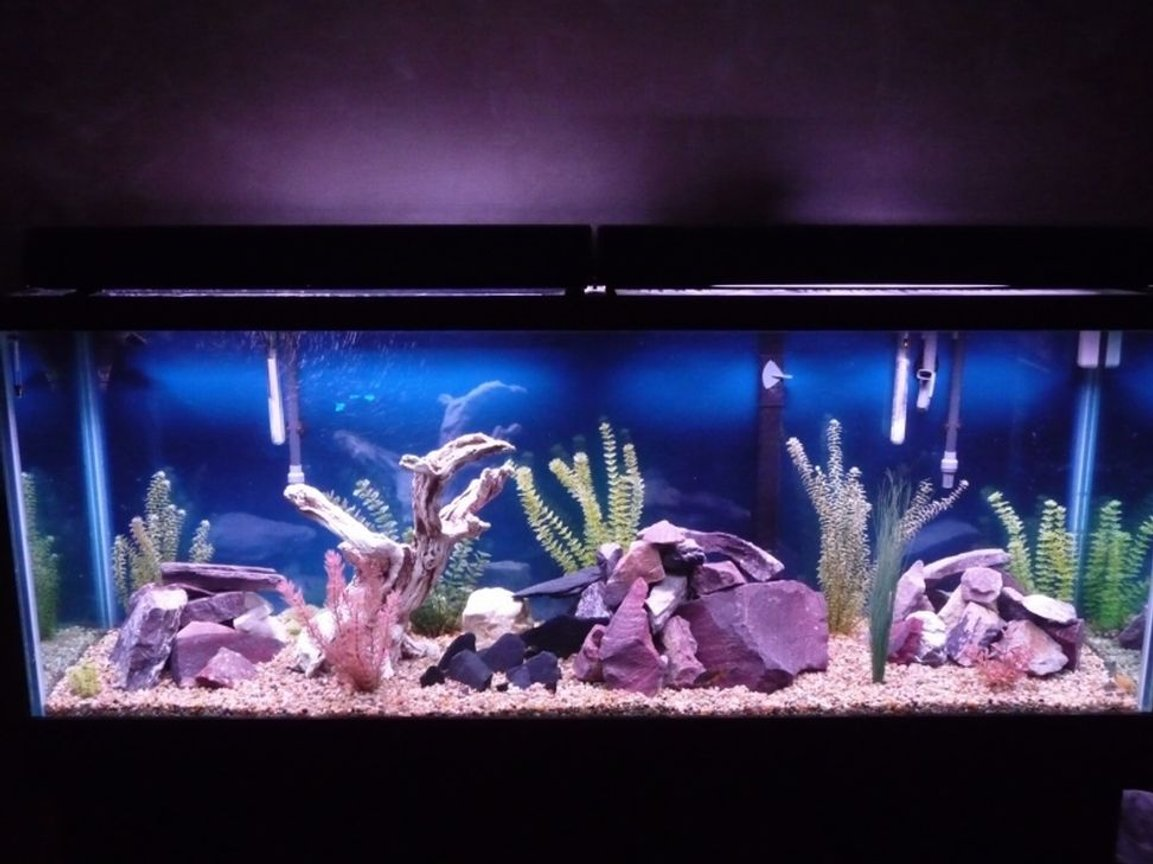 fish tank picture - 150 gallon
