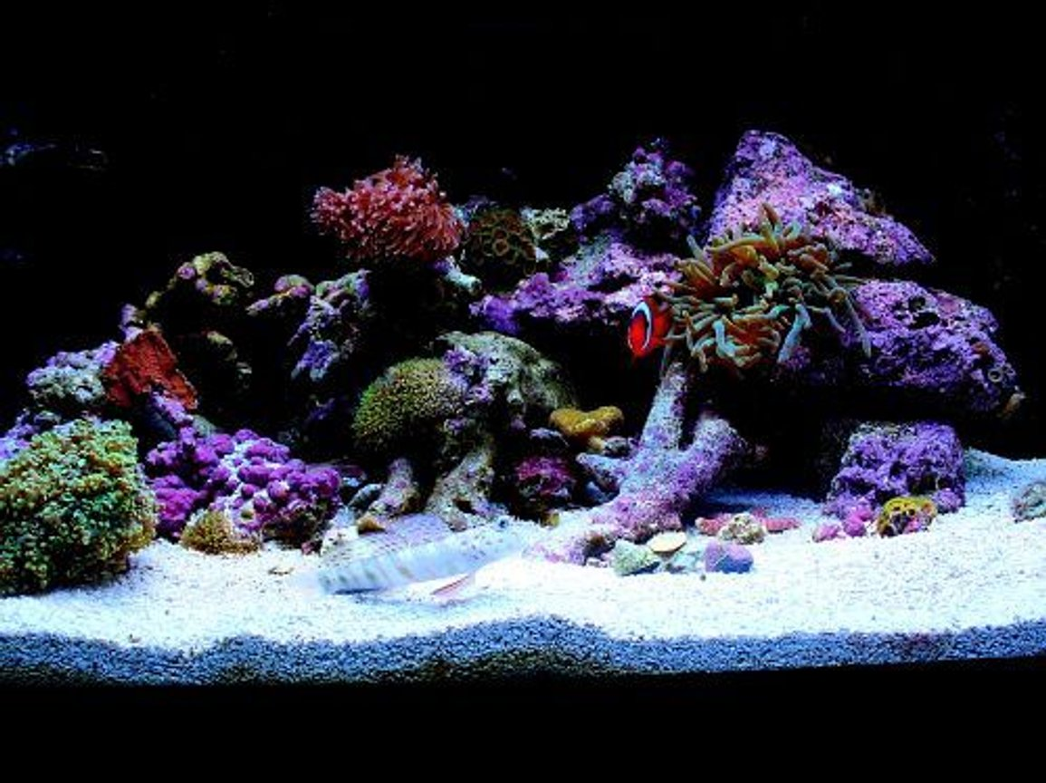 fish tank picture - My 15 gallon mixed reef
