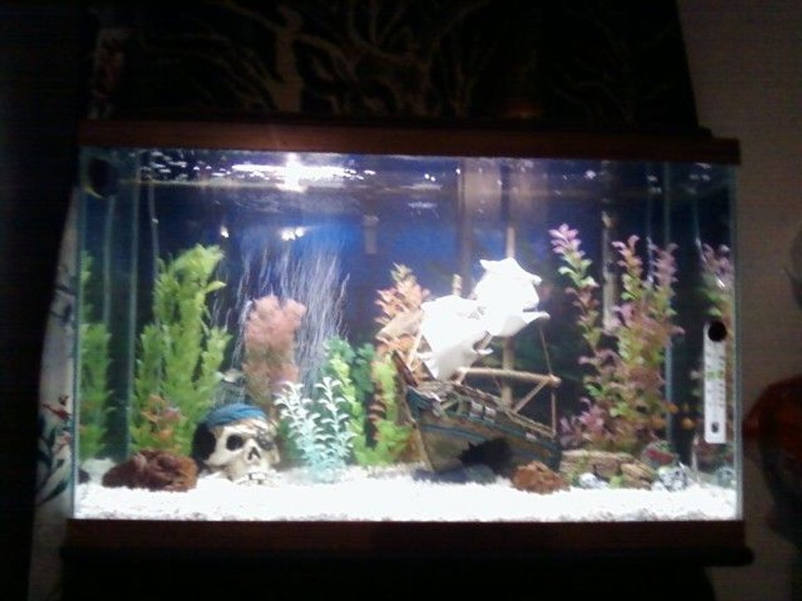 fish tank picture - Pirate ship wreck with pirate theme. Nothing big but just want to know what everyone thinks.