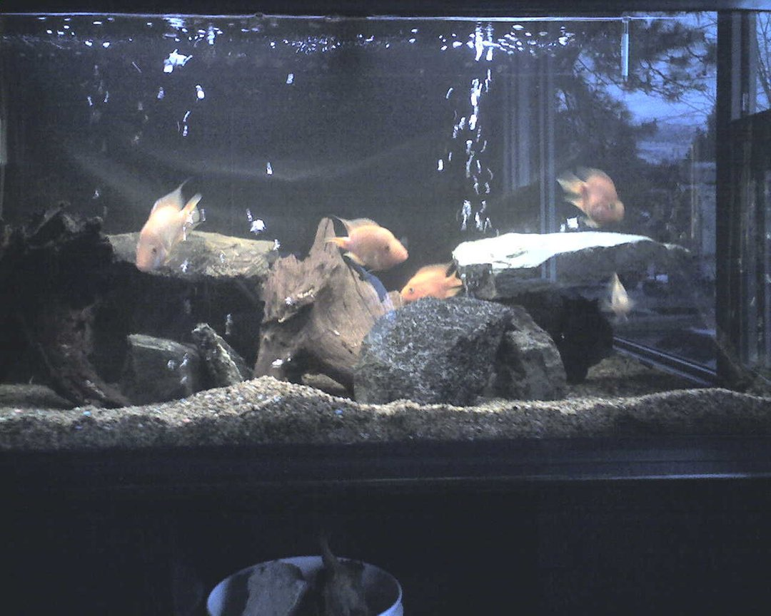 fish tank picture - Tank#2