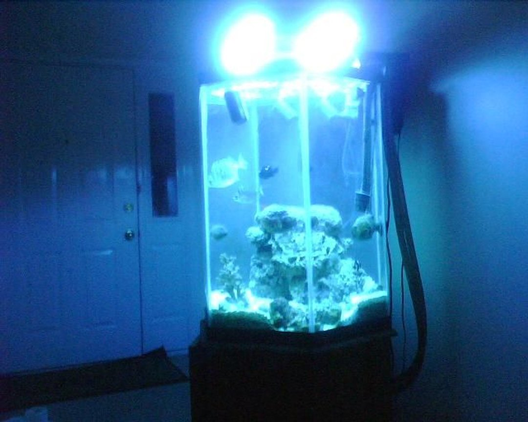 fish tank picture - n/a