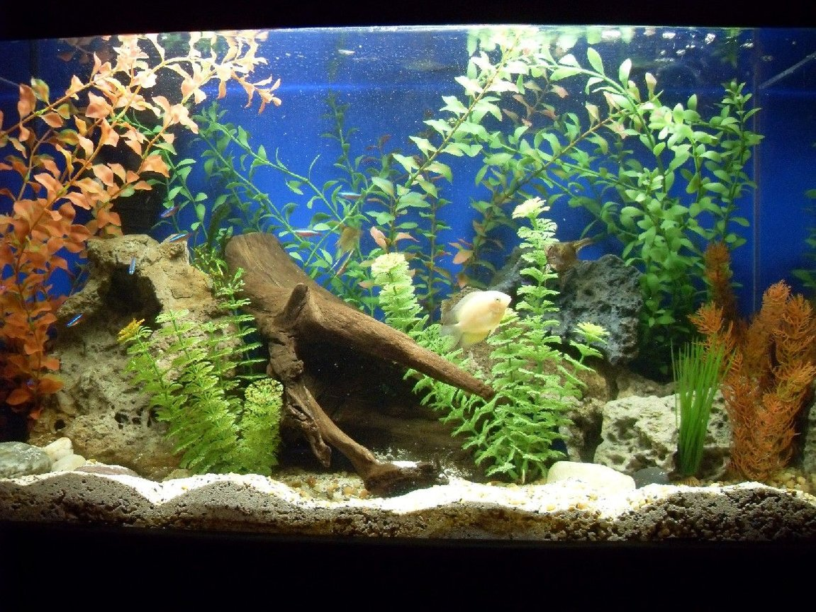 fish tank picture - 30gl freshwater front view