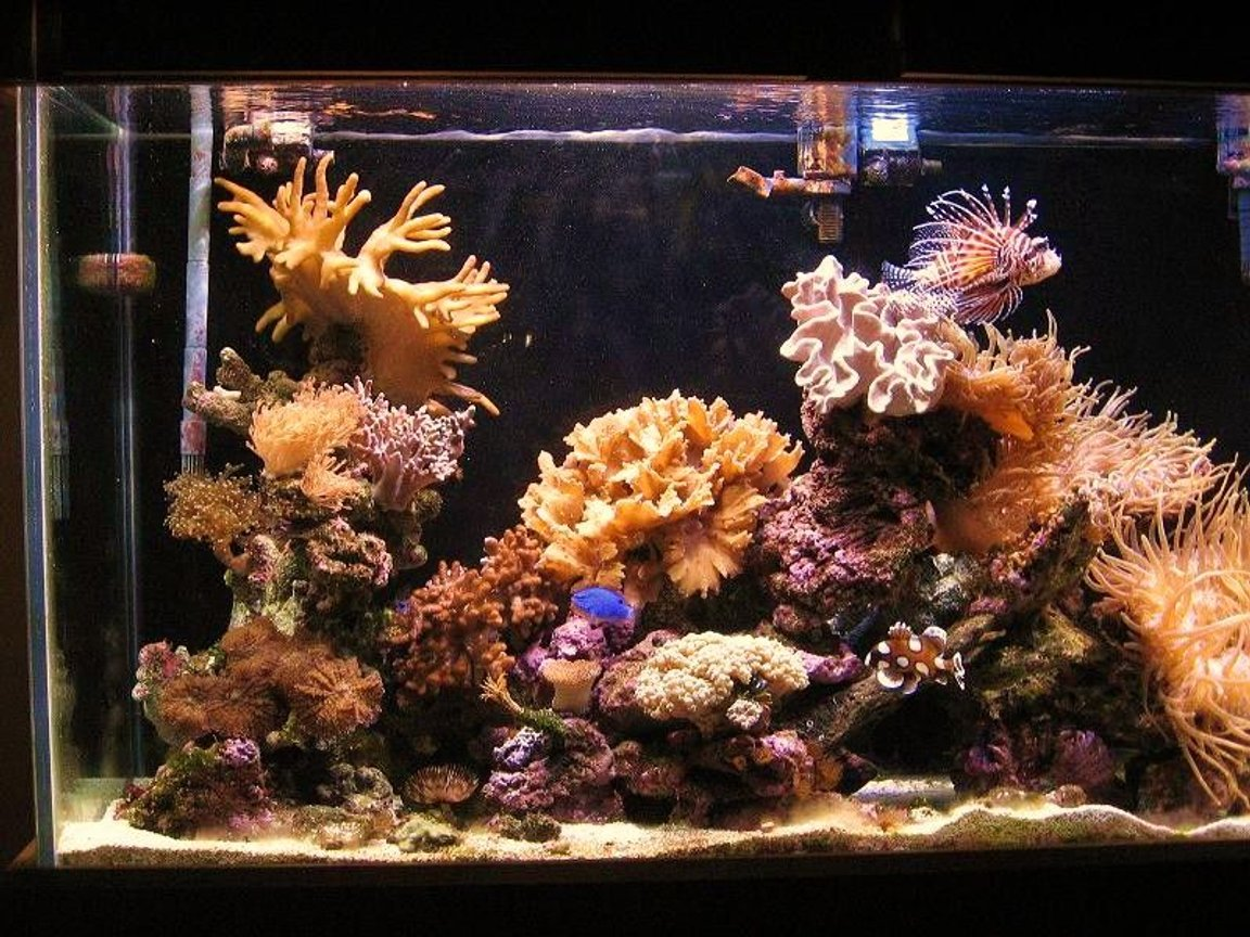 fish tank picture - left side .