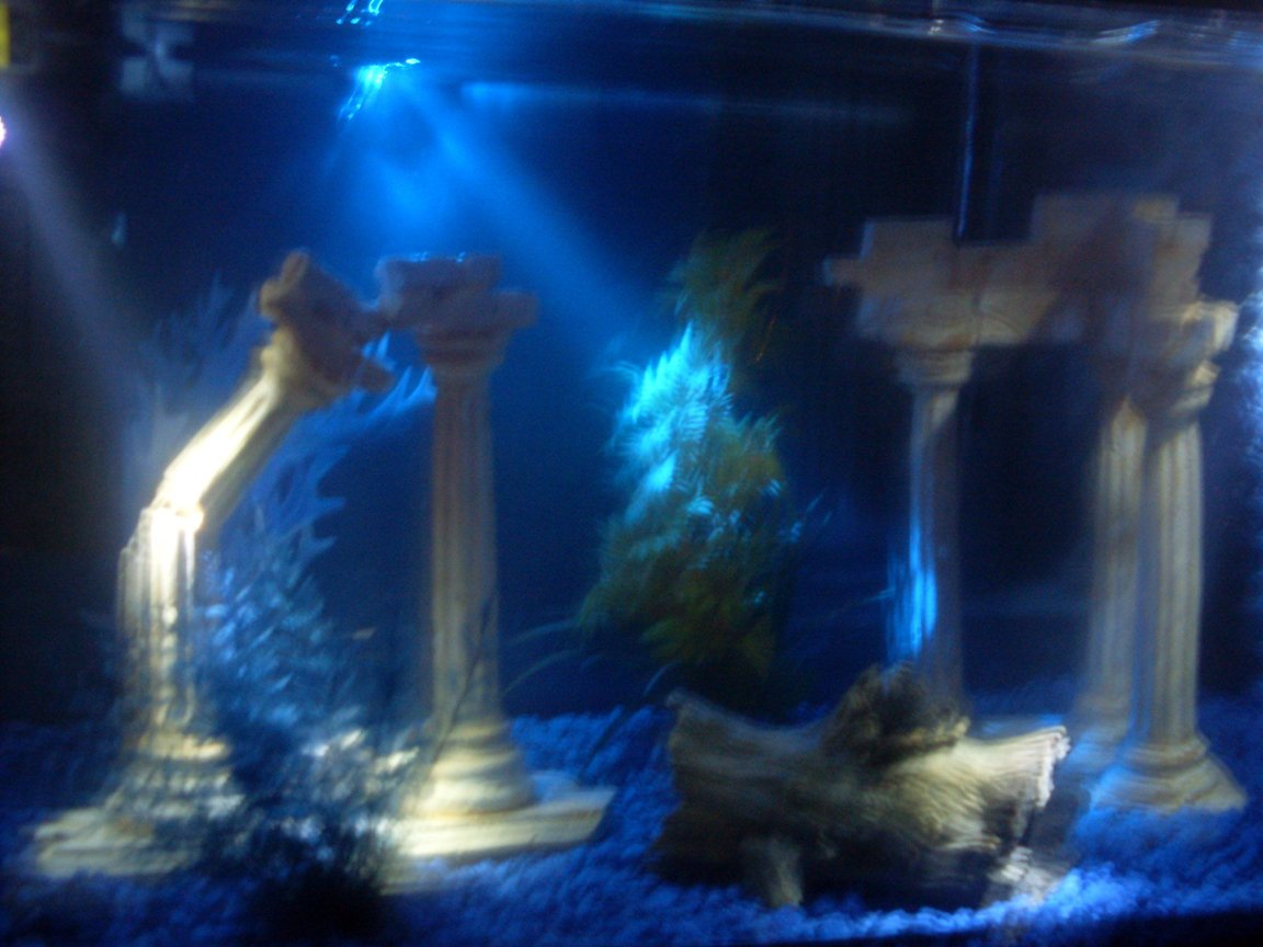fish tank picture - no fish yet...but roman theme with lots of blue!