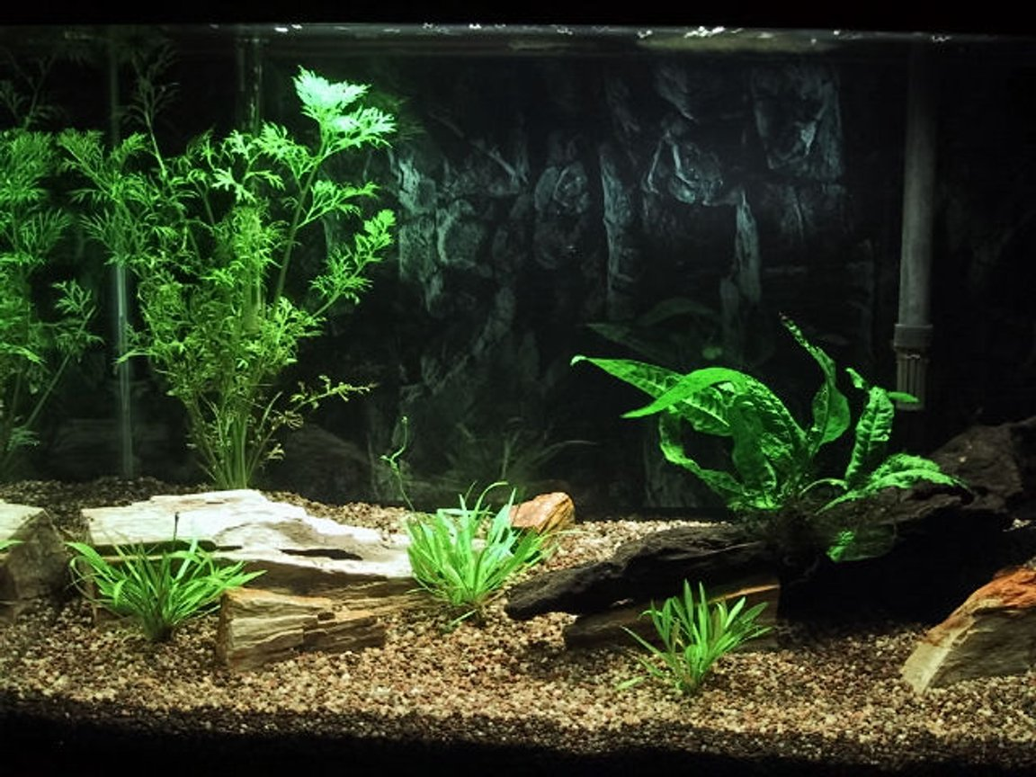 fish tank picture - My 20 gallon high tank, still cycling (two weeks so far) and just added live plants, fish to come! I changed the background of my tank to a darker one.