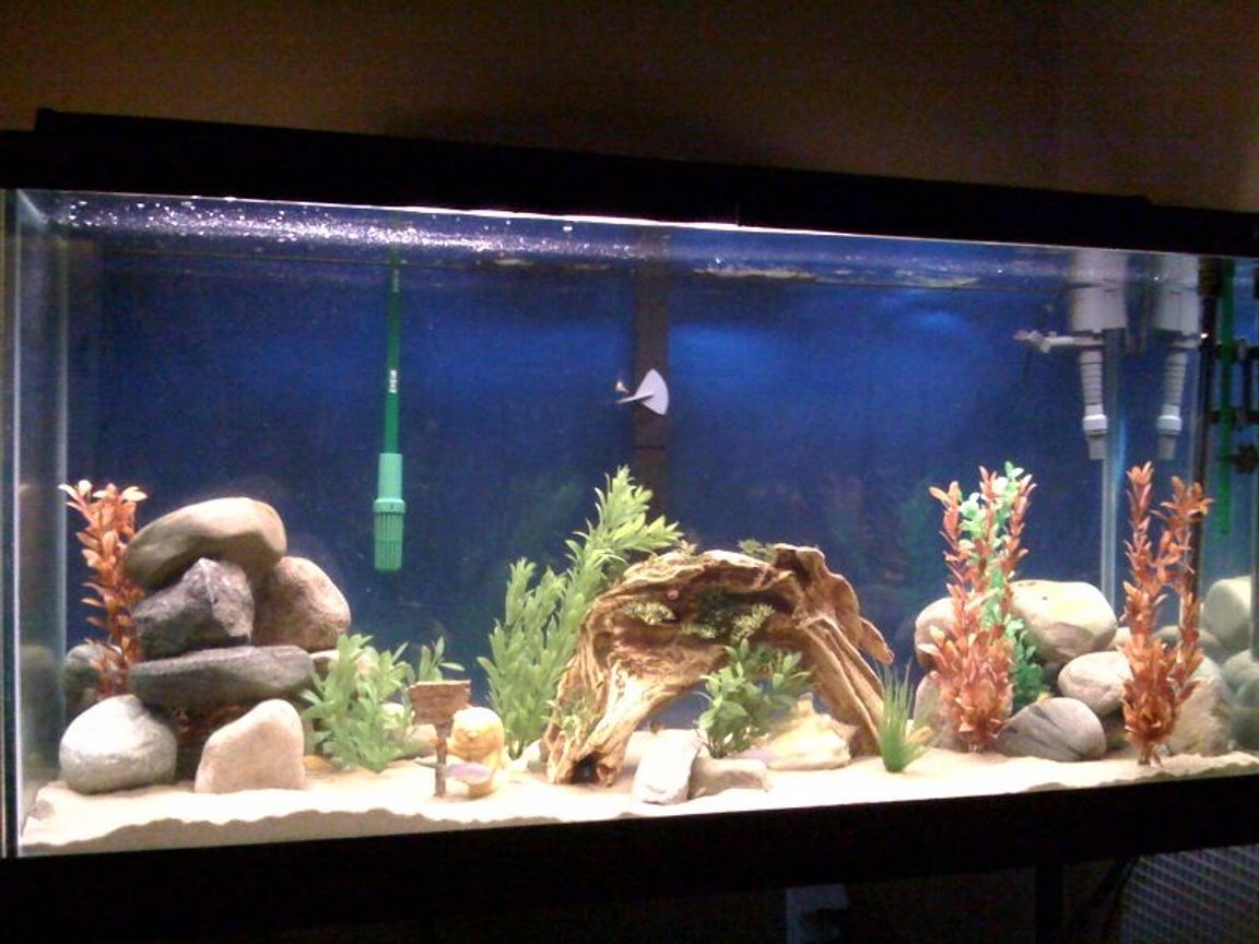 fish tank picture - updated tank with driftwood and power jet.