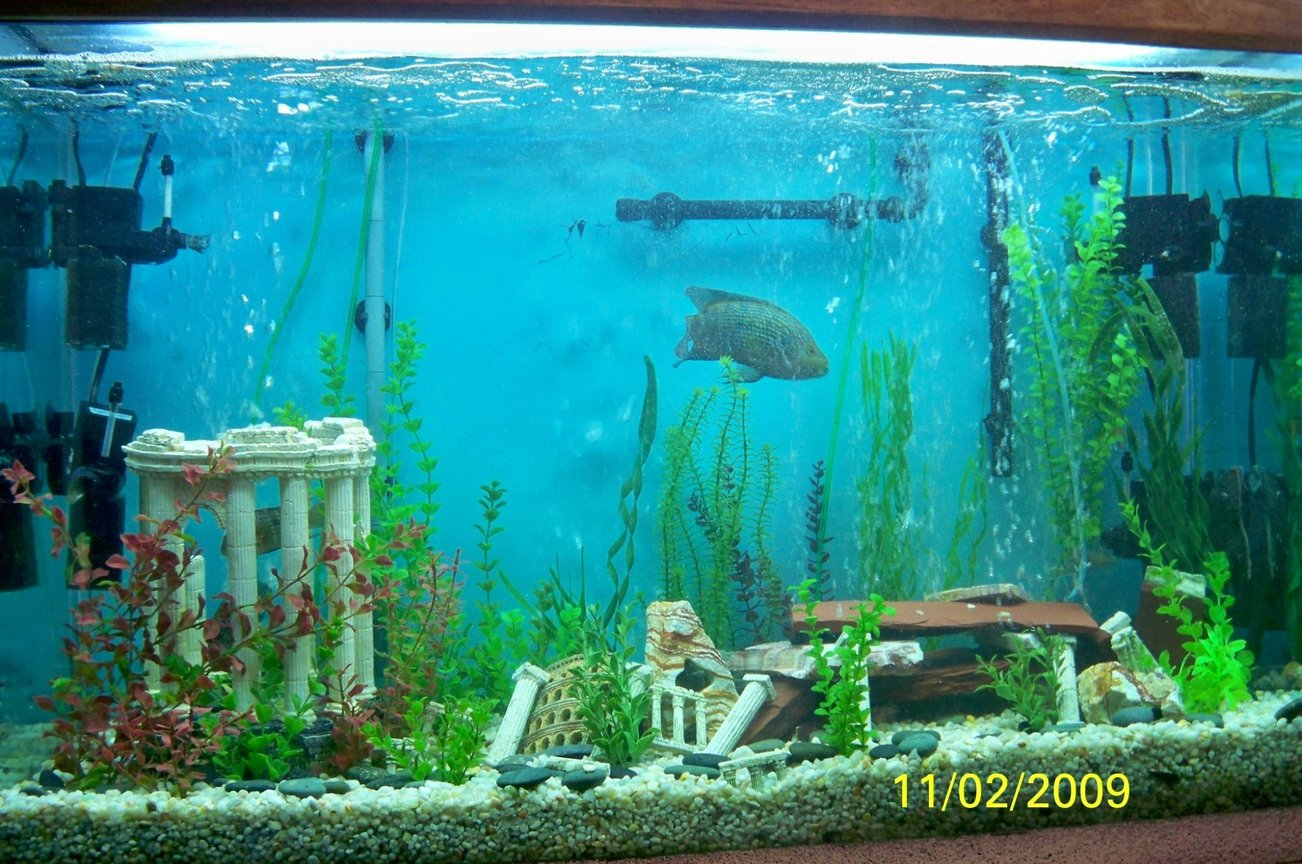 fish tank picture - 120 gal South American Cichlid Tank