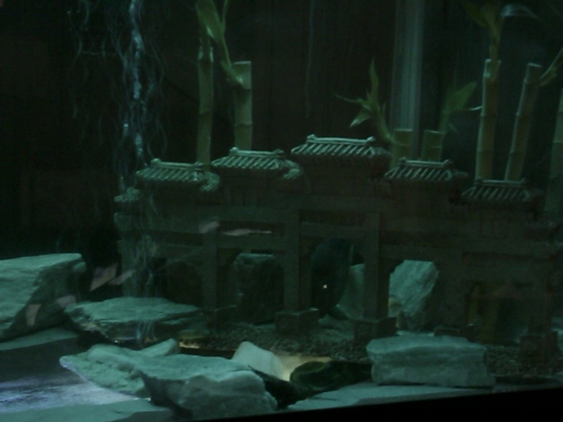 fish tank picture - the bifiscatium in her in mings tomb