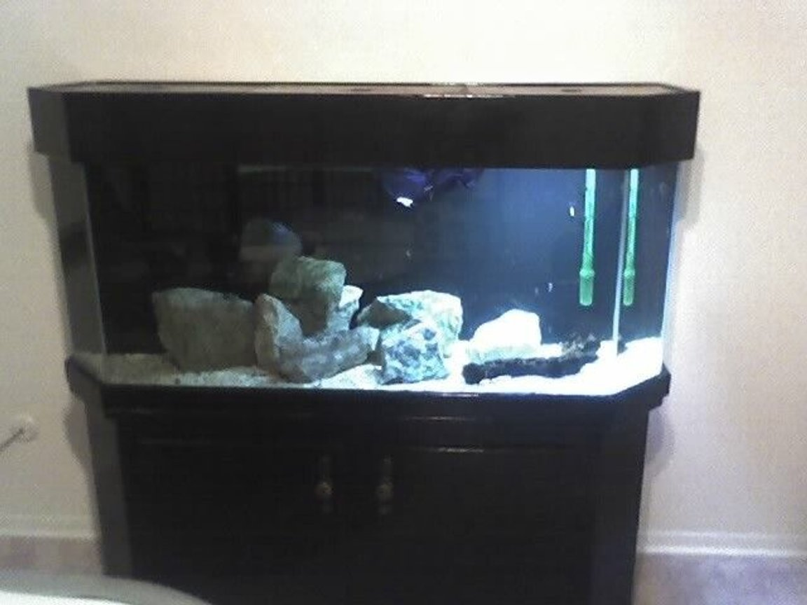 fish tank picture - This was the tank before I bought it. Badly painted black with a useless corner overflow.