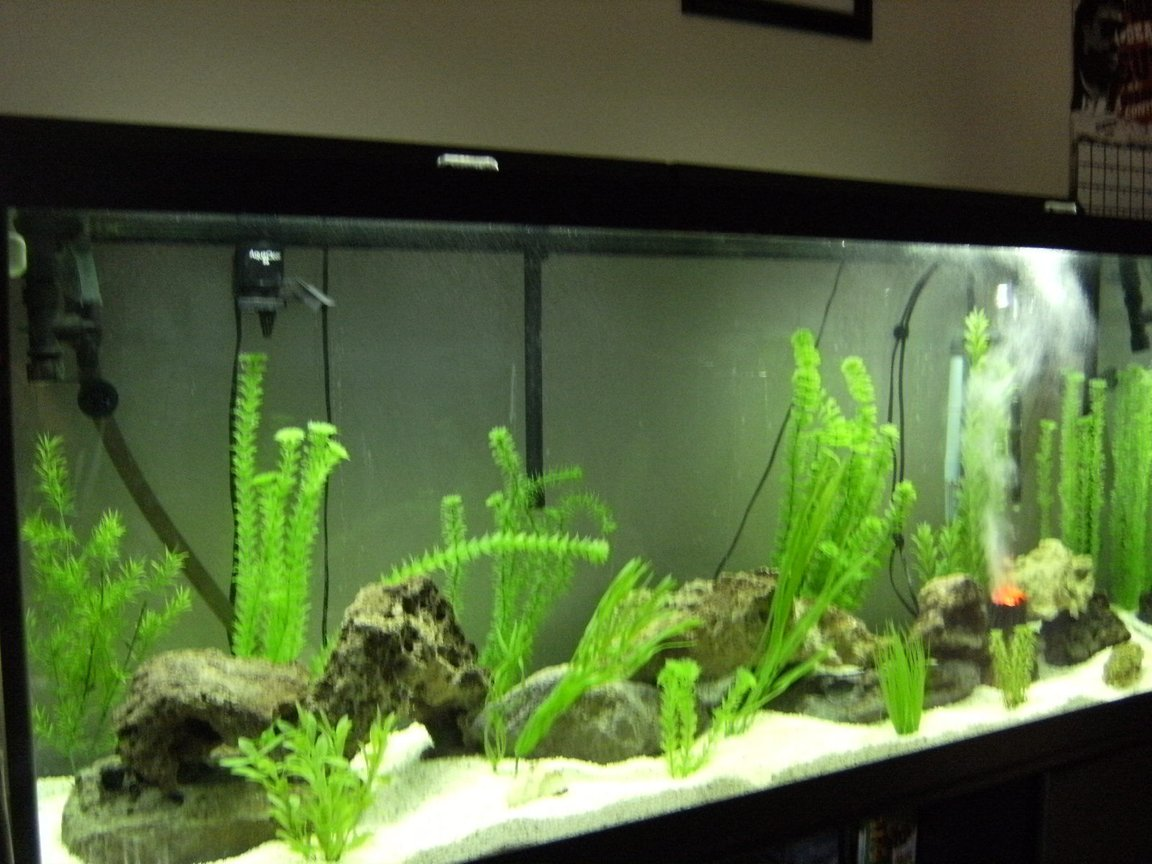 fish tank picture - just getting started..... no fish yet...