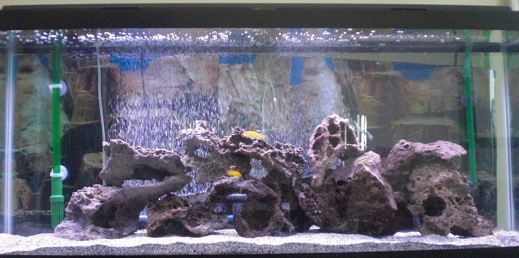 fish tank picture - Sorry about the crappy picture but what do you think>?