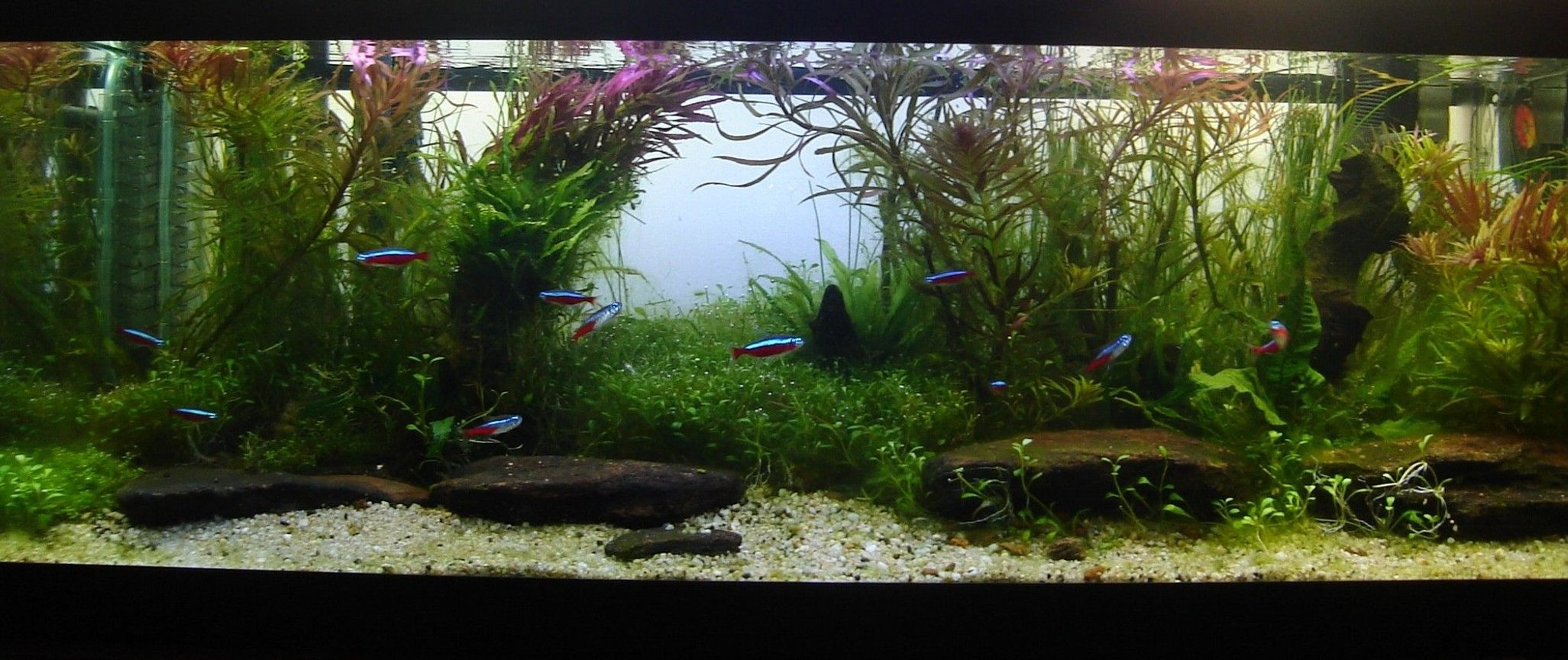 fish tank picture - growing