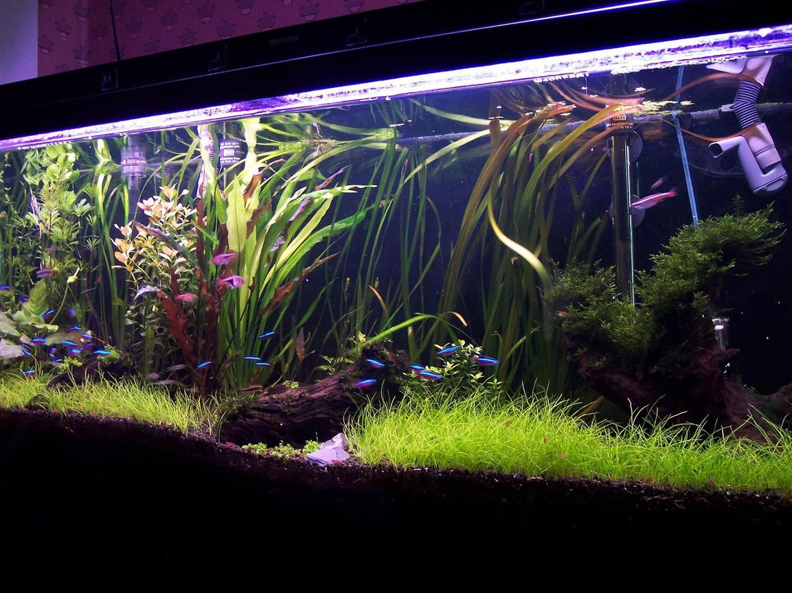fish tank picture - another view