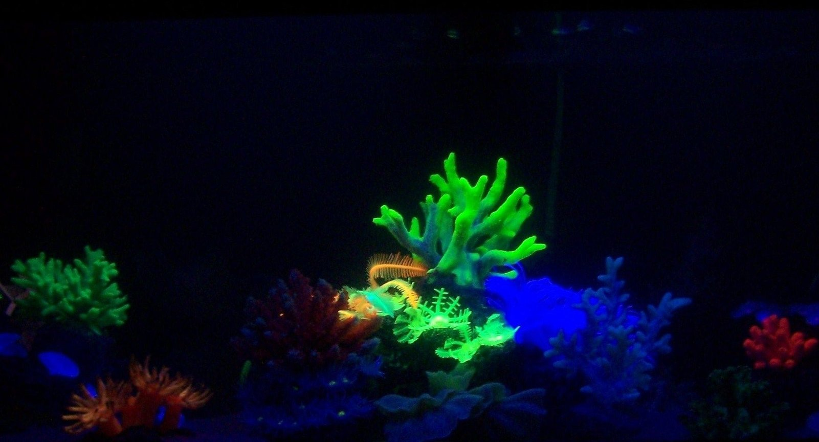 fish tank picture - My Tank Under my Blacklight