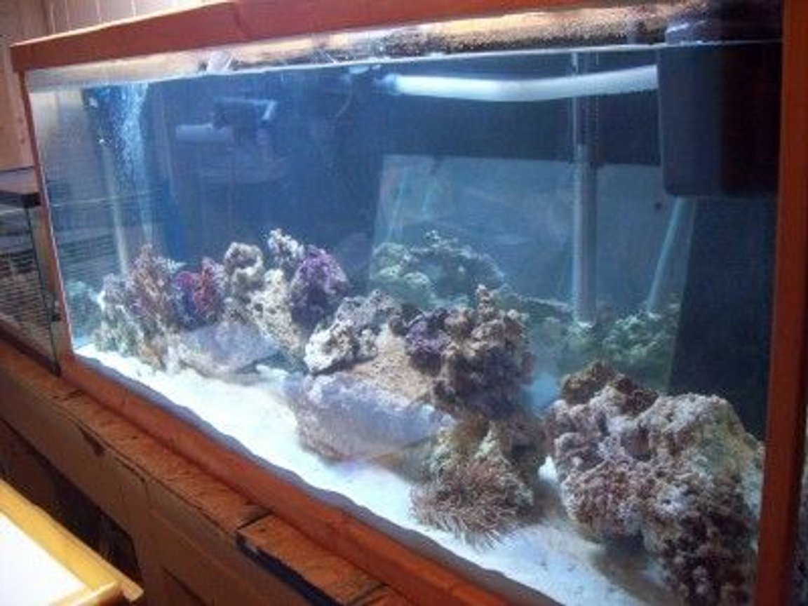 fish tank picture - another photo with new live rock added