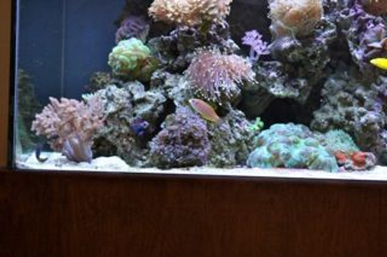 fish tank picture - Front Side View Left