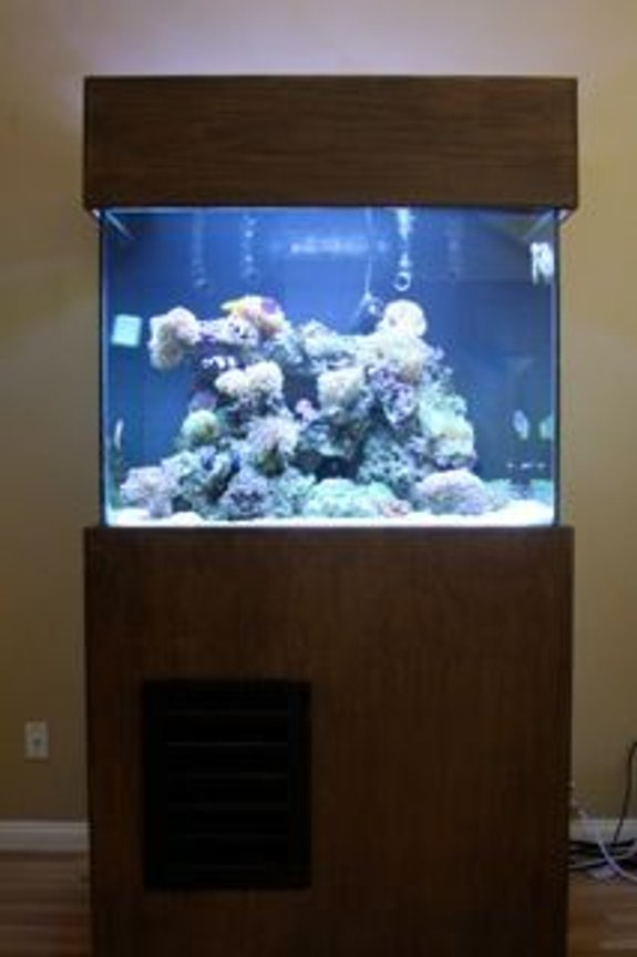 fish tank picture - Big Daddy 210 Gallon 8FT Tall