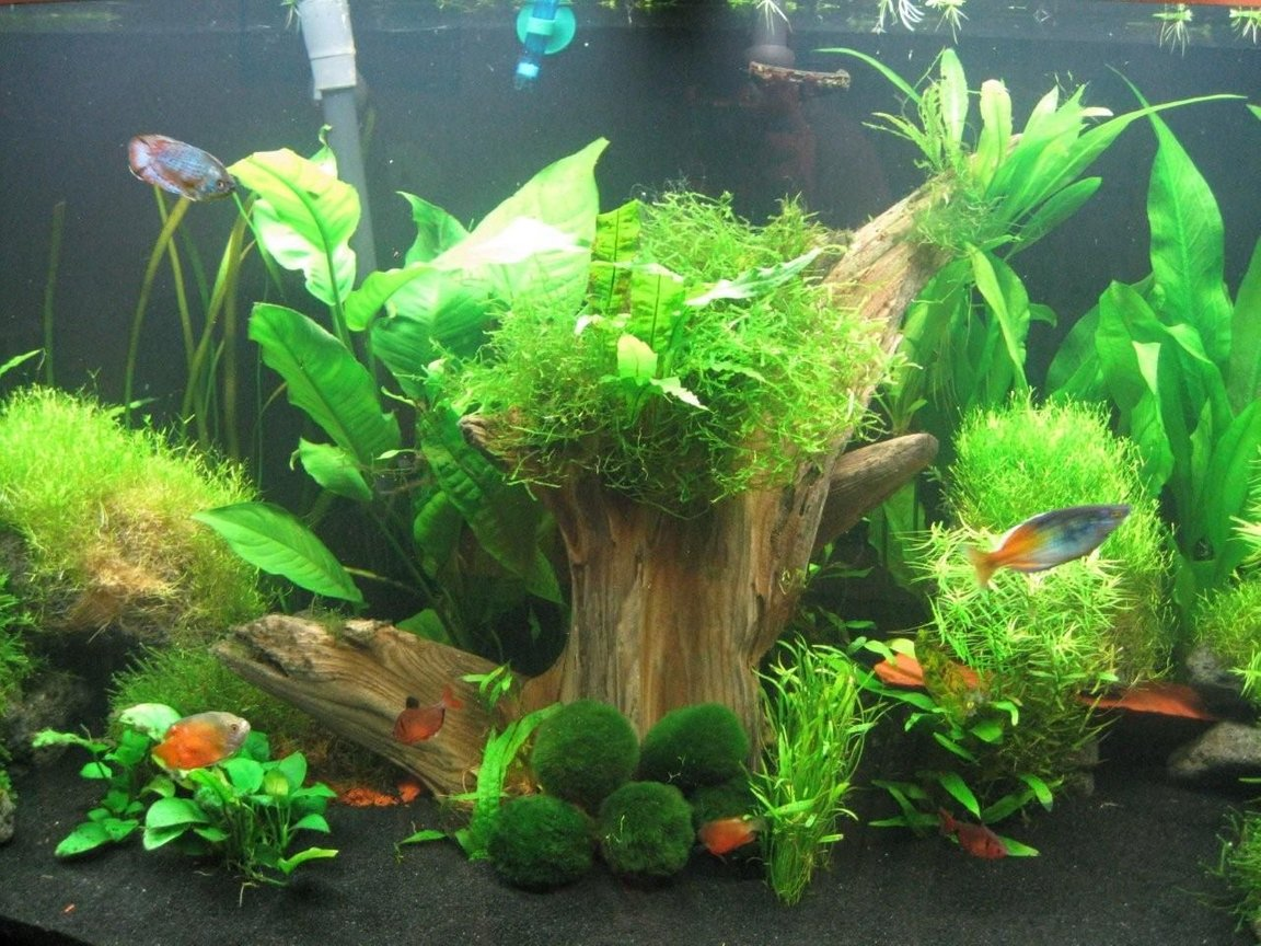 fish tank picture - Middle close-up