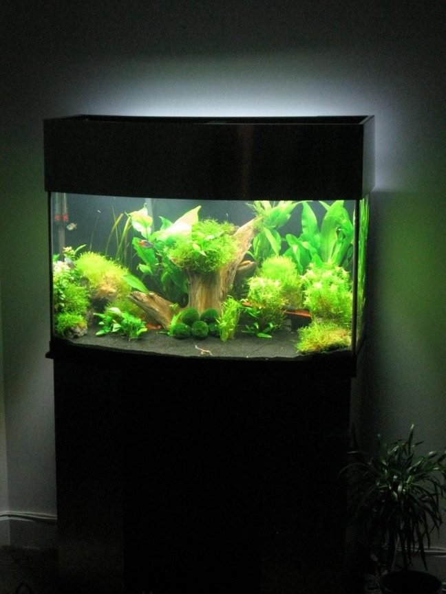 fish tank picture - Whole setup with top on