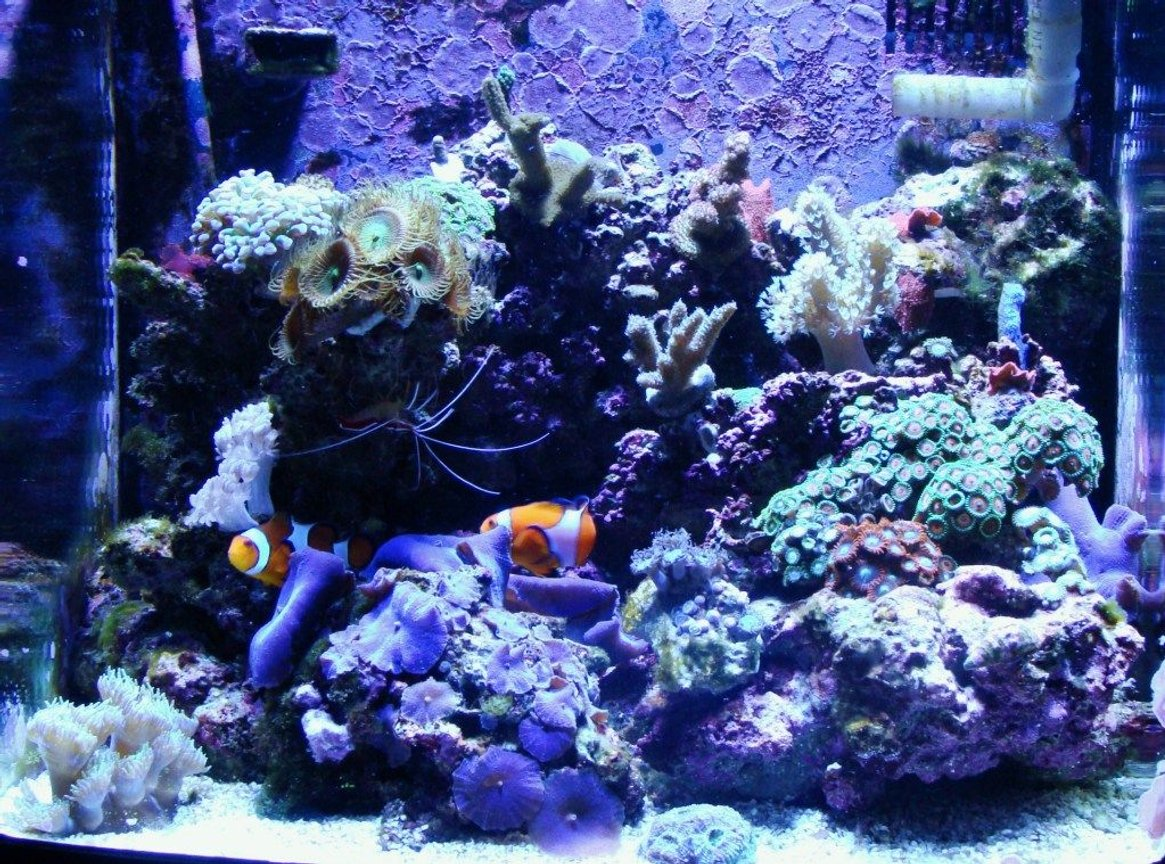 fish tank picture - My First Reef Tank ( 10 Month Old Bio-Cube 14 )
