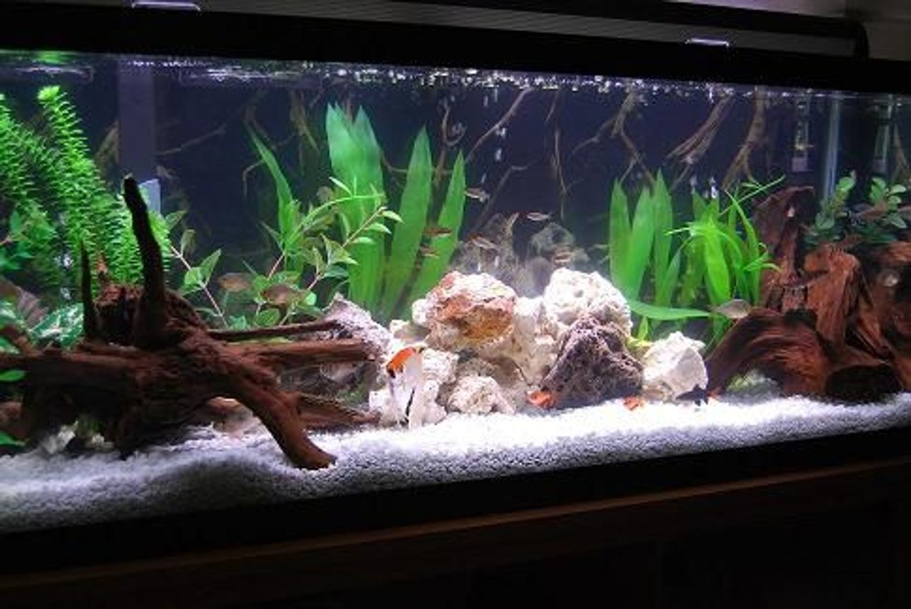 fish tank picture - My new 50 gallon tank