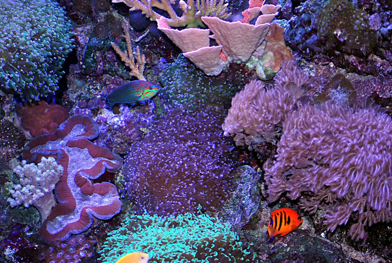 fish tank picture - lots of waving corals