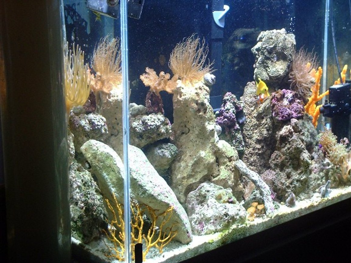 fish tank picture - Left side is 400 watt MH light too much for a 29 gallon