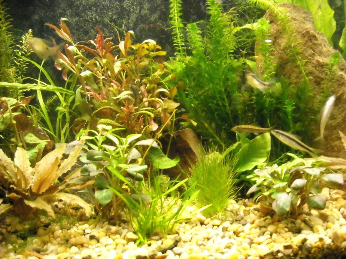 fish tank picture - close ups.