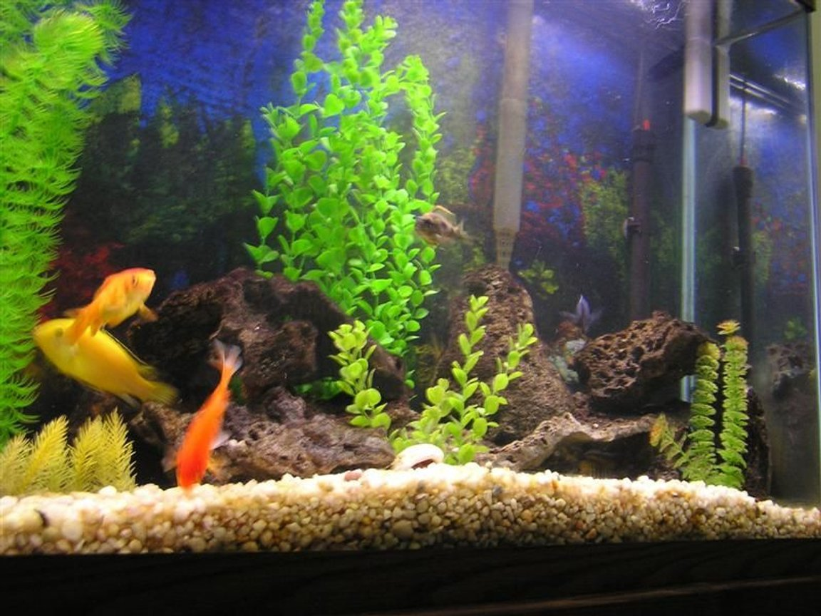 fish tank picture - A different view