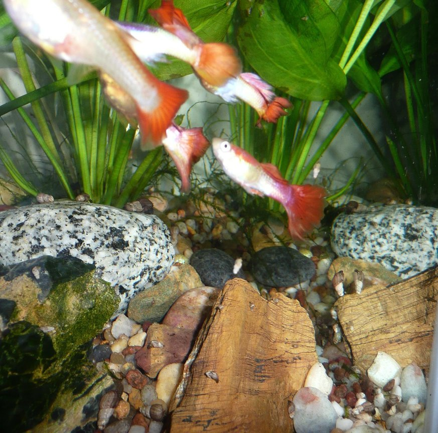 fish tank picture - fishes 2
