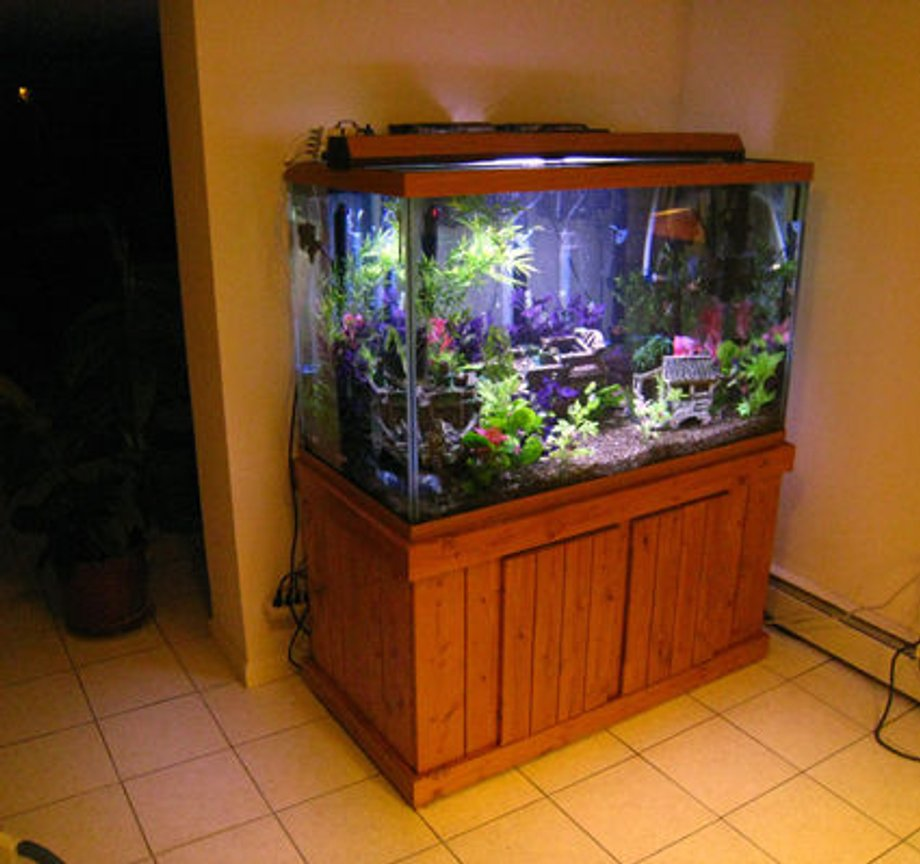 fish tank picture - colors