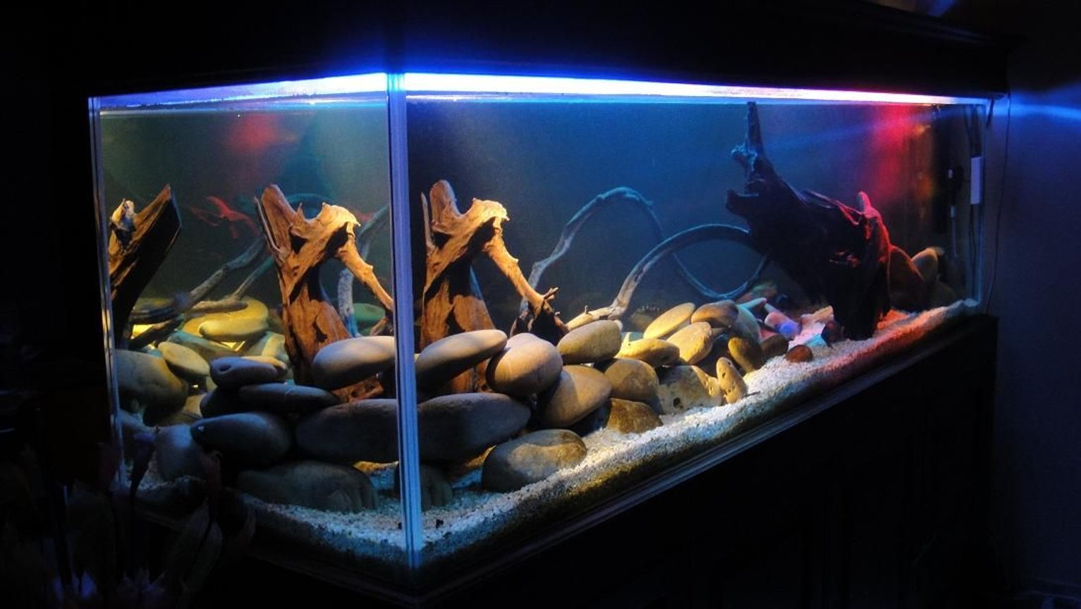fish tank picture - another look