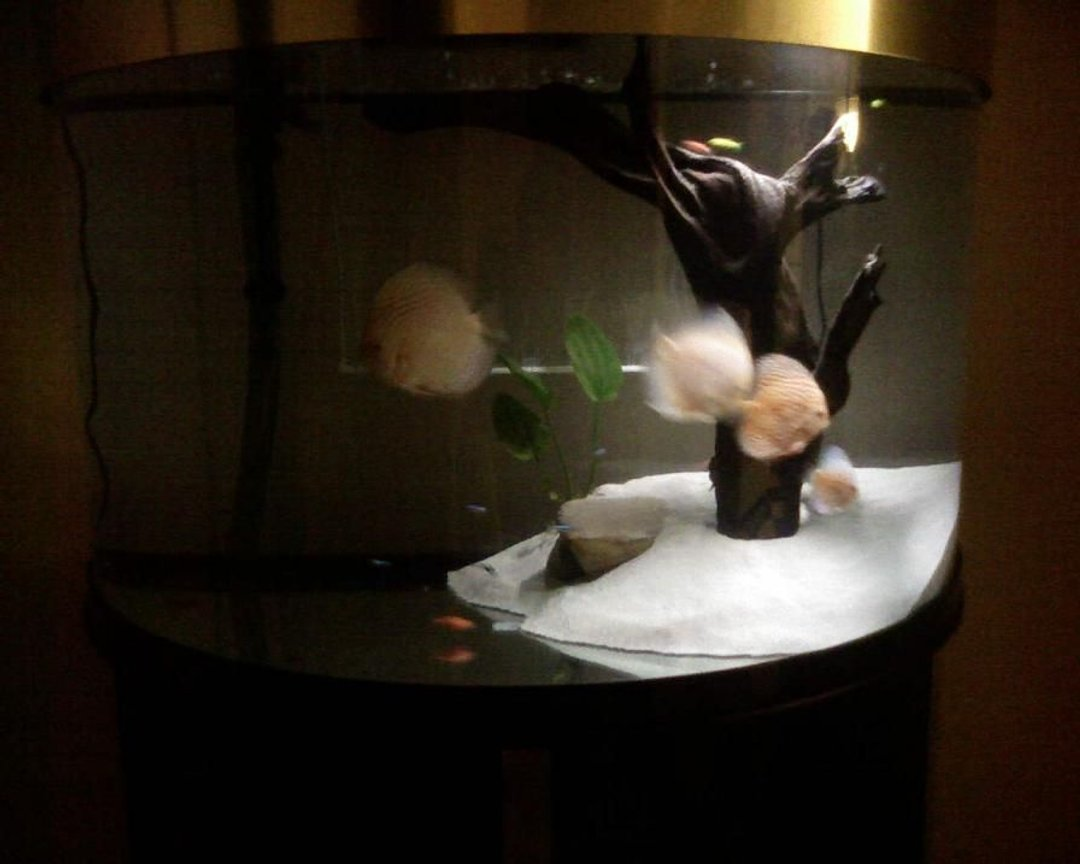 fish tank picture - extra2